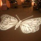 'Butterfly' Gobo