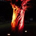Tree Lighting (3)